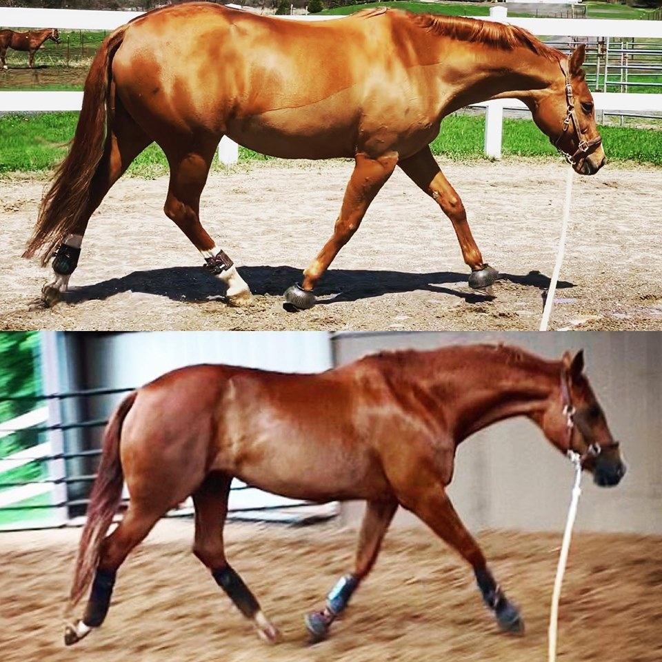 Horse development with training