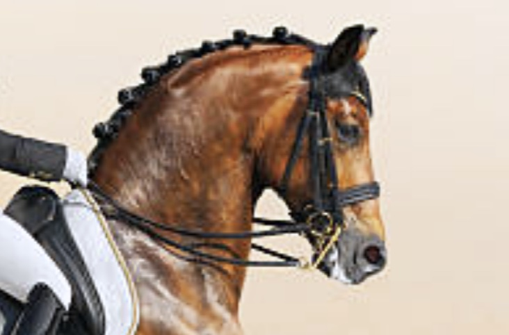 which-horse-reaching-into-rein-connection-dressage-frame